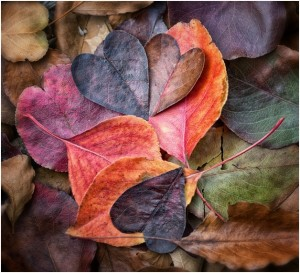 rblackbook - heart shaped leaves